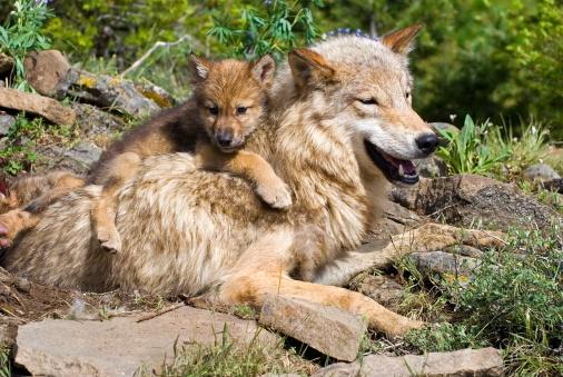 instinto-maternal